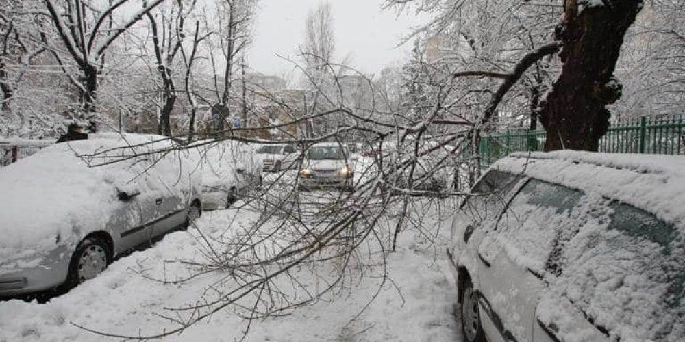 Dezastru, zeci de copaci prabușiți în stradă și peste mașini