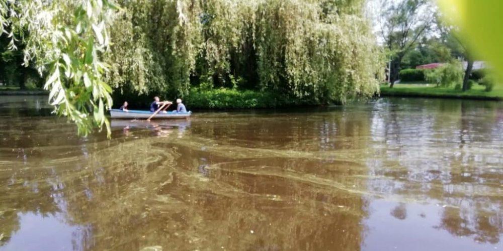 Cu barca prin Ștrand printre alge și mătasea broaștei